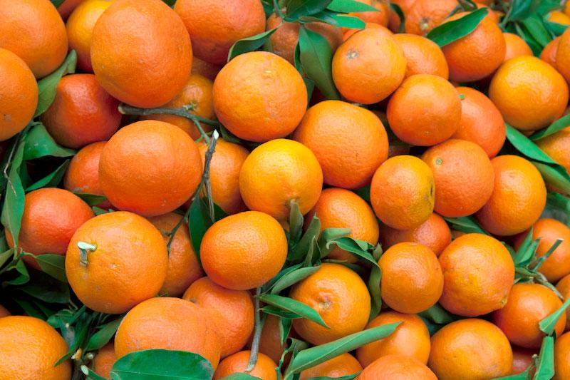 Med-Fruit-fruit
